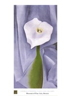 Calla Lily on Grey  Fine Art Print