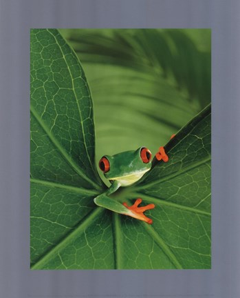 Framed Tree Frog Print