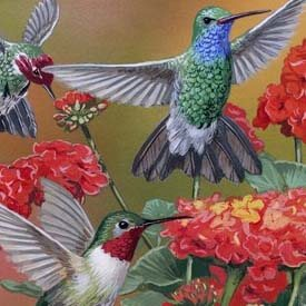 Hummingbirds & Flowers Print