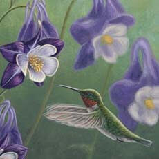 Hummingbird Purple - Columbine