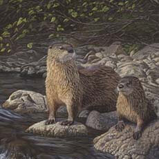 Otter Tail River Otters