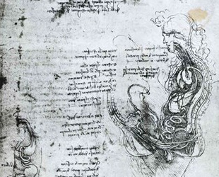 Coition of Hemisected Man and Woman by Leonardo Da Vinci