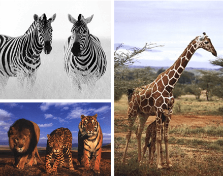 African Animal Artwork