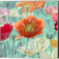 Poppies in Bloom I Fine Art Print