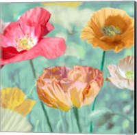 Poppies in Bloom II Fine Art Print