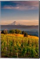 Mt Hood From A Vineyard Fine Art Print