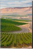 Dusk On A Vineyard Fine Art Print