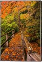 Autumn Maple Leaves On A Bridge Fine Art Print