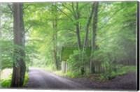 Frenzy Green Fine Art Print
