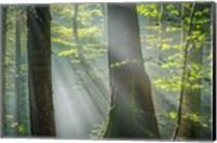 Shower of Light Fine Art Print