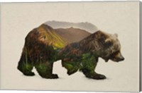 North American Brown Bear Fine Art Print