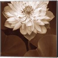 Lotus Welcome Fine Art Print