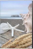 Crescent Beach Shells 12 Fine Art Print