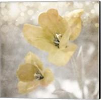 Yellow Tulip 03 Fine Art Print