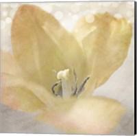 Yellow Tulip 04 Fine Art Print