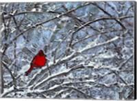 Cardinal in the Snow Fine Art Print
