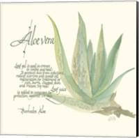 Aloe Vera Fine Art Print