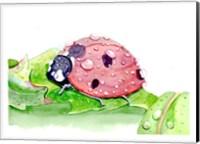 Ladybug Fine Art Print