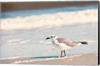 See the Seagull Fine Art Print