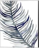 Blue Feathered Palm I Fine Art Print