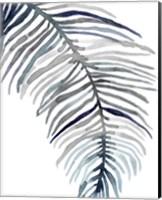 Blue Feathered Palm II Fine Art Print