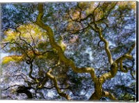 Looking Up At The Sky Through A Japanese Maple Fine Art Print