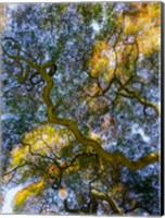 Delaware, Looking Up At The Sky Through A Japanese Maple Fine Art Print