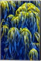 Oregon, Bandon Abstract Photo Of Pacific Sea Kelp Fine Art Print