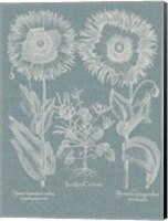 Besler Poppies I Fine Art Print
