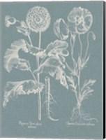 Besler Poppies II Fine Art Print