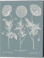 Besler Poppies IV Fine Art Print