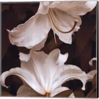 White Lilies Fine Art Print