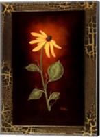 Blooming Daisy Fine Art Print