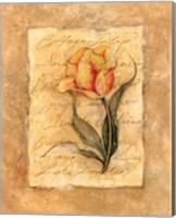 Cottage Tulip Fine Art Print