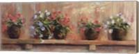 Petunias in Pots Fine Art Print