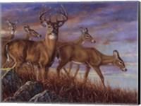 Evening Gold Fine Art Print