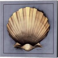 Coastal Shell II Fine Art Print