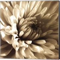 Sepia Bloom I Fine Art Print