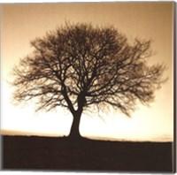 Winter Tree No. 2 Fine Art Print