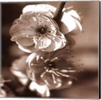 Blossom II Fine Art Print