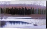 Cedars and Brook - Winter Fine Art Print