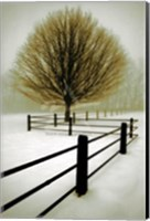 Solitude Fine Art Print