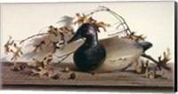 Chesapeake Bay Canvasback Fine Art Print