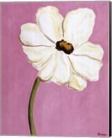 White Cosmos On Pink Fine Art Print