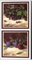 Blackberry Plum Combo Fine Art Print