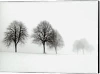 Winter Trees II Fine Art Print