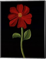 Red Cosmos Fine Art Print