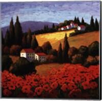 Tuscan Poppies Fine Art Print