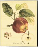 Petite Tuscan Fruits I Fine Art Print