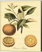 Petite Tuscan Fruits III Fine Art Print